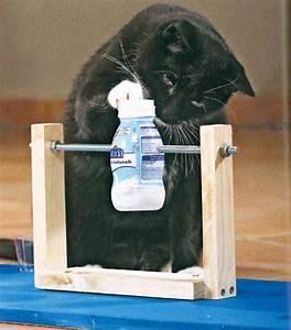 Katzenspielzeug Selber Machen Karton : katzenspielzeug selber machen die stadtbibliothek rheinberg bloggt ~ Frokenaadalensverden.com Haus und Dekorationen