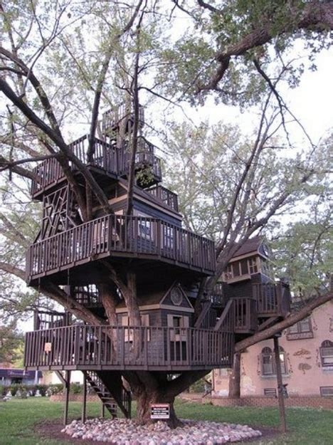 treehouse taster  wildly  types  tree houses architecture design