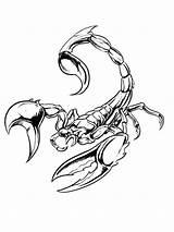 Scorpions Poisonous Arthropods Escorpion Scorpio Horloge Scorpiones Signes Sourcils Arthropod Drivecolor sketch template