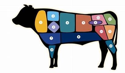 Meat Beef Cuts Cut Brand Dealer Standards