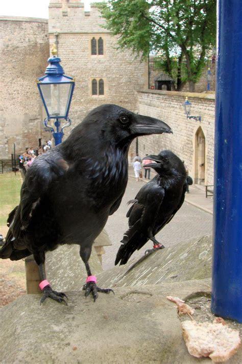 876 best images about best art crows ravens on pinterest