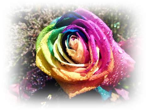 ดอกกุหลาบ - nktc5731050076