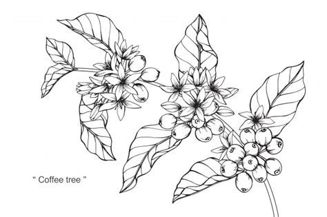 Today you'll learn how to do an easy coffee painting. Coffee tree Vector | Premium Download