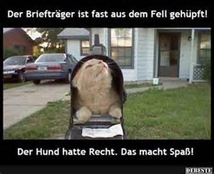 sprüche lustig bilder 72 best tiere süß lustig images on animals sayings and animals