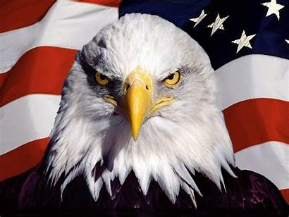 Eagle Flag Bald American Background Wallpapersafari Kop