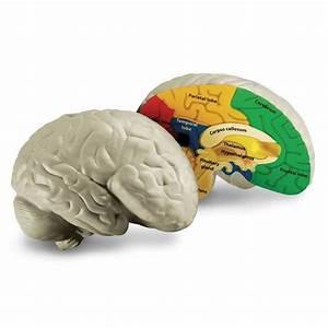Brain Cross