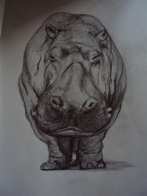 hippo drawing ideas  pinterest giraffe
