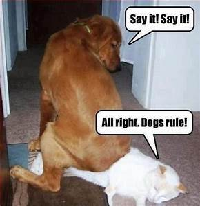 The Doggie Thread   Page 2   Why We Protest   Anonymous ...