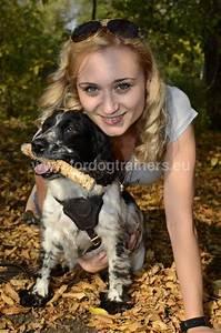 Harnais Gros Chien : harnais pour chien qui tire vente en ligne du materiel pour chien en belgique ~ Nature-et-papiers.com Idées de Décoration