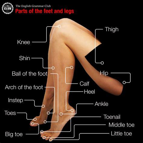 Parts Of The Leg And Foot  Human Organ System