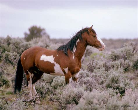 horse andalusian running hd horses chainimage asian wallpapers