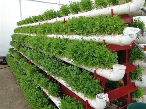 Proyecto Planos Hidroponía Orgánica Ecológica Quintal Casa