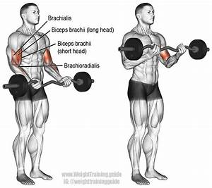 Ez Bar Curl Exercise Instructions And Video