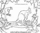 Marsupial Kangaroo Wallaby Pademelon sketch template