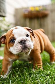 Best Family Small Breed Dogs