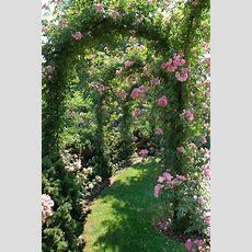 49 Best Vines Images On Pinterest  Climber Plants