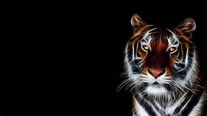 Tiger Animated Animal Desktop Wallpapers 4k Wild