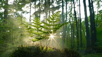 Sun Smoke Living Nature Natural Animated Plants
