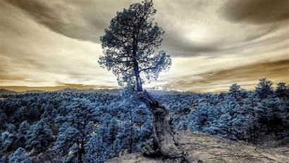Tree Forest Photoshop Hill Background 1080p Fhd
