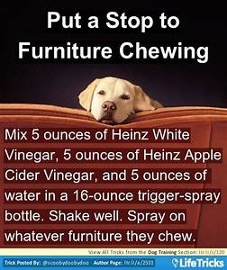 1000 ideas about dog furniture on pinterest pet With stop dog chewing bed