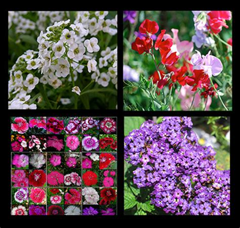 types of annual plants choose fragrant annuals and perennials for lovely scented gardens