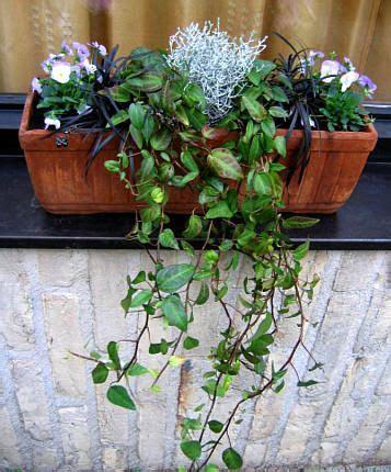 bloembakken opvullen met winterharde planten tuinen