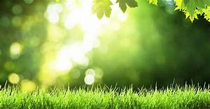 lawn care calendar for cool season lawns