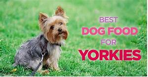 what is the best dog food for yorkies pets is my world With best dog food for yorkies