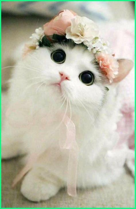 nama kucing betina yang bagus lucu dan keren kucing