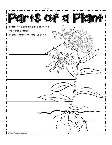 label the parts of a plant worksheets