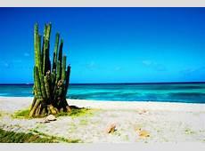 cactus giganti Soledad, Aruba Travellerspoint Travel