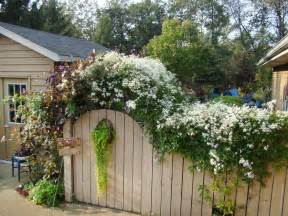 Clematis Vines White Fence