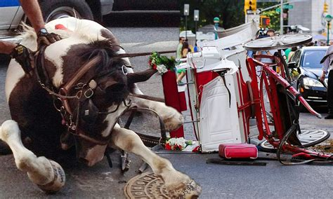 Meghan McCain runaway carriage chaos  horse tosses tourists 1024 x 615 · jpeg