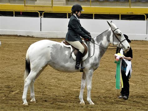 mule saddle hunter under horse mules custom quarter saddlery braymere separate watched classes three ribbons