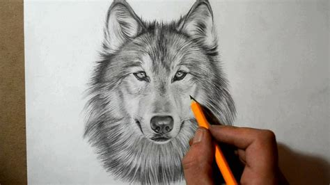 draw  wolf youtube