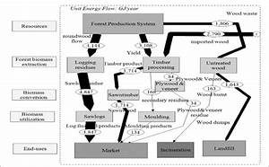 Mfa Schematic Diagram For Biomass Energy Flow In Forest