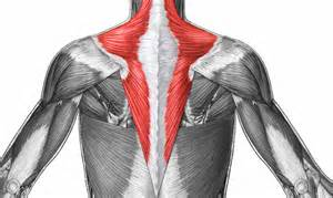 Physical Therapy Trapezius Muscle Exercises