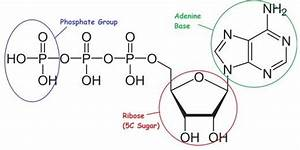 24 Best Images About Macromolecules On Pinterest