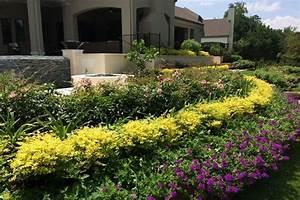 Sunshine Ligustrum For Sale The Planting Tree