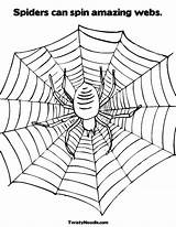 Spider Coloring Web Spiders Spin Webs Legs Worksheet Pages Incredible Spinning Drawing Amazing Wheel Template Weensy Eensy Twistynoodle Built California sketch template
