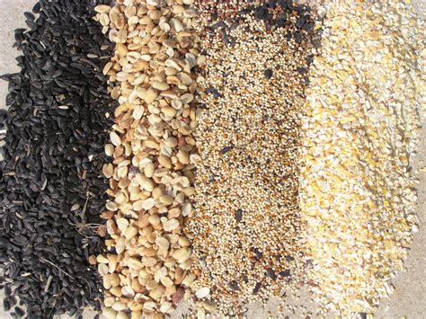 types of bird seed different types for wild birds
