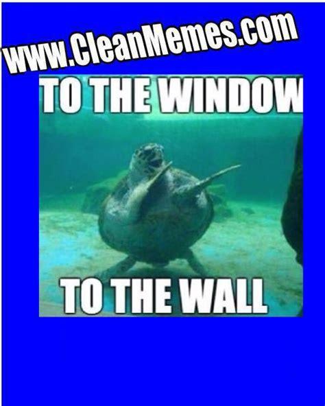 Funny Turtle Memes - sea turtle meme