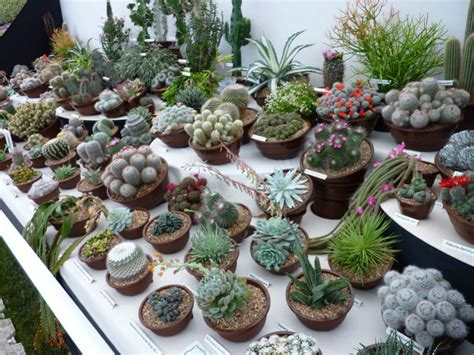 Cacti and Succulents   World of Succulents