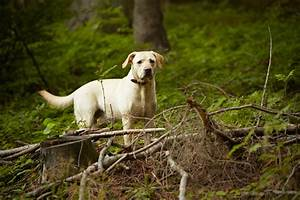 search q=Lyme Disease Symptoms in Dogs&FORM=RESTAB