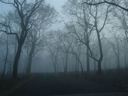 Eerie Forest Freeimages Grudge Edit Ago Check