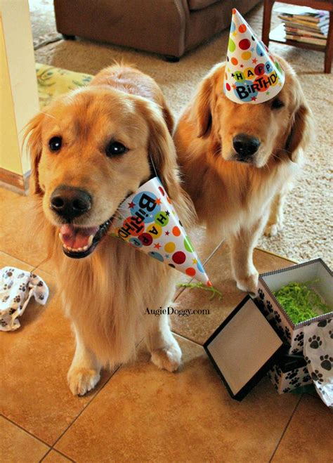 663 Best Happy Birthday Doggie Images On Pinterest