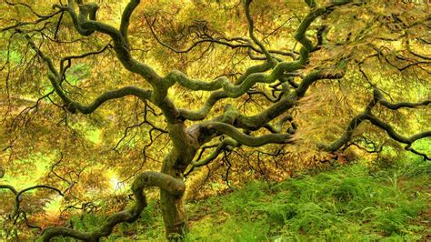 Twisted Image Twisted Tree Wallpapers Earth Hq Twisted Tree Pictures