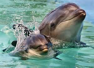 Killer Whale Dolphin Hybrid