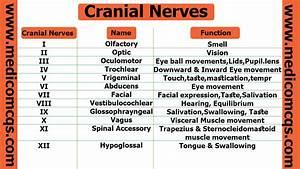 Cranial Nerves Chart