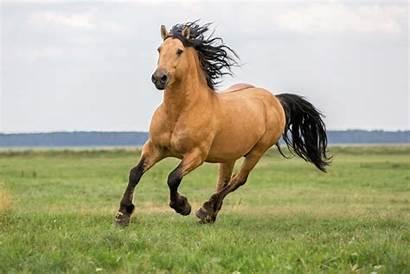 Horse Happy Healthy Riding Bedding Running Deals